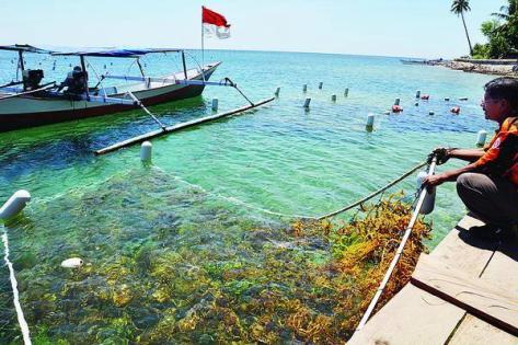 Prospek Pengembangan Budidaya Laut Dan Payau Di Kabupaten Muna For