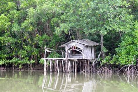 mangrove-3